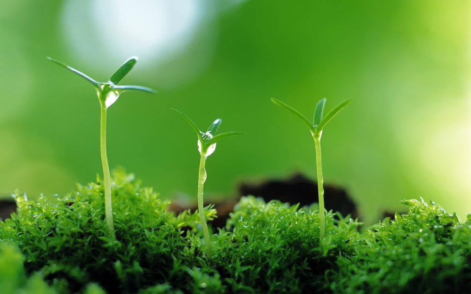 Giải mã ý nghĩa giấc mơ cây cối đâm chồi nảy lộc -