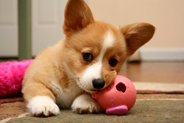 Giải mã giấc mơ thấy chó - Nằm mơ thấy chó đánh con gì? | 188Loto